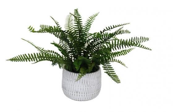 Fern In White & Grey Pot main image