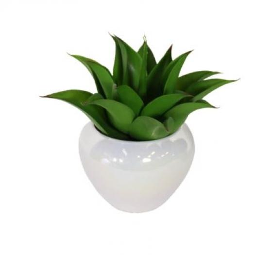 Potted Plant In Opalescent Vase main image