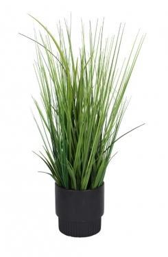Tall Grass in Black Pot main image