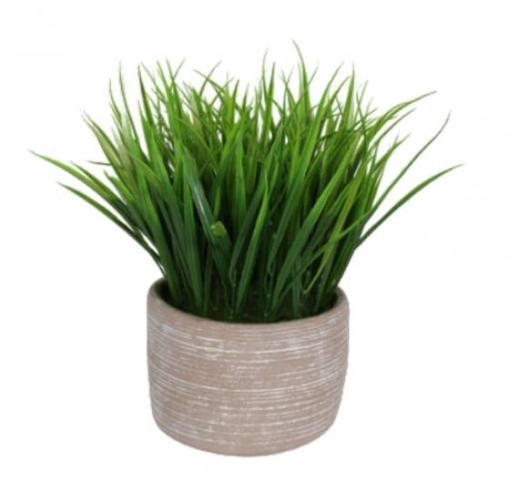 Grass In Terra Cotta Pot main image