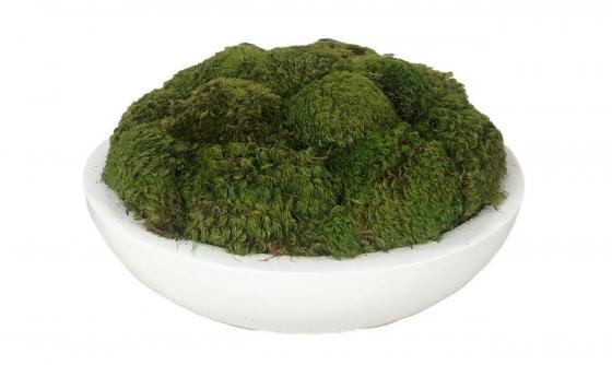 White Bowl Of Moss main image