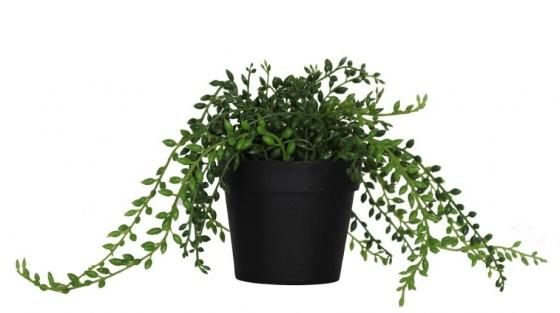 Potted Plant main image