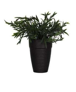 Plant in Black Pot main image