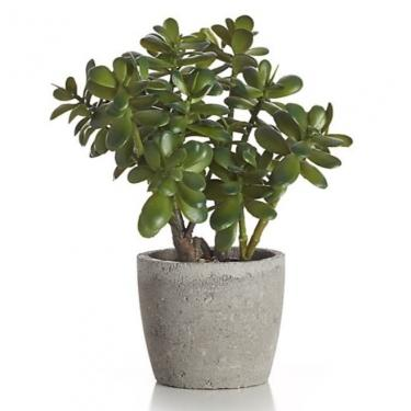 Potted Artificial Jade Plant main image
