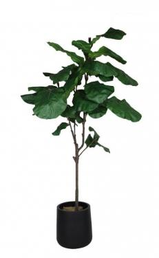 7Ft. Fig Tree with Basket main image