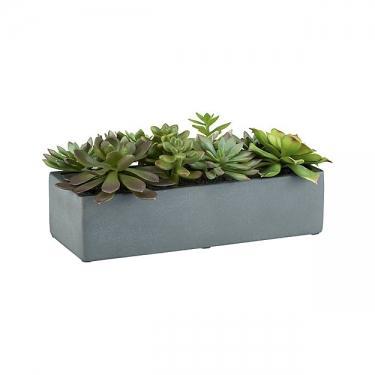 Succulents In Pot main image