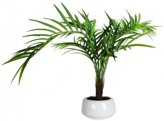 Palm In White Pot main image