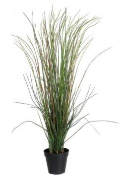 Potted Grass main image