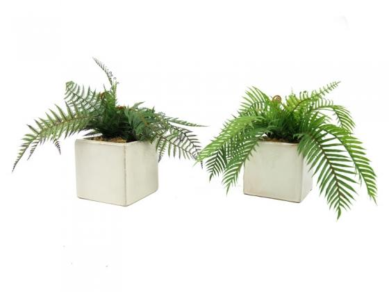 Ceramic Planters with Ferns main image