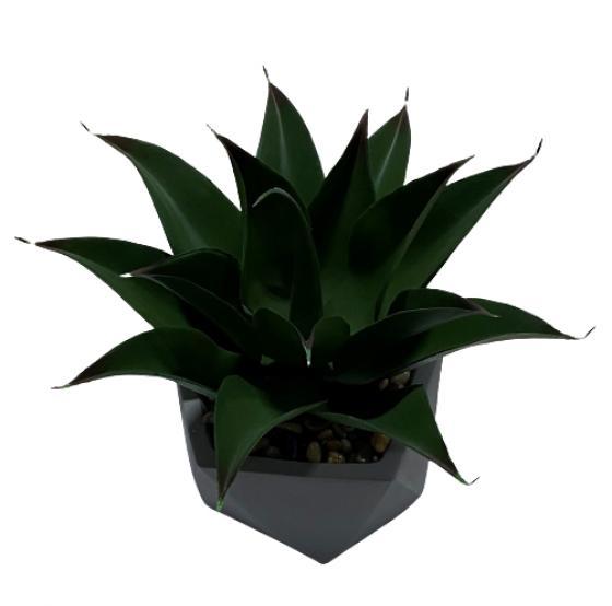 Broad Leaf Cactus in Grey Vase main image