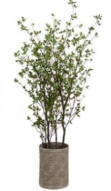 7' Cornus Tree in Fiber Cement Planter Green main image