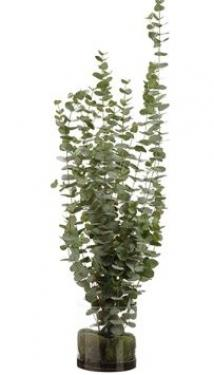 Eucalyptus in Glass Vase Green main image