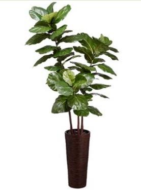 7.5' Fiddle Leaf Tree in Bamboo/Rope Container Gre main image