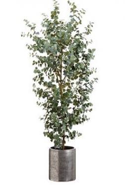 6.5' Eucalyptus Tree in Aluminum Planter Green main image