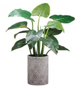 "48"" EVA Curcuma Plant in Cement Planter Green main image"