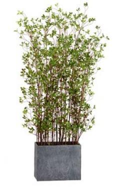 6' Mini Leaf Plant in Planter  Green main image