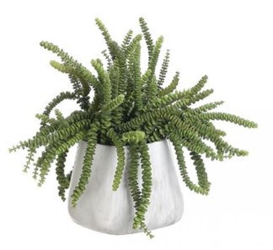 Money Succulent Terra Cotta Pot Green main image