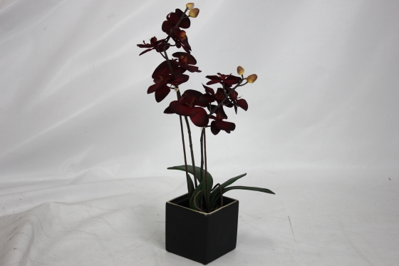 Red Orchid in Black Pot main image